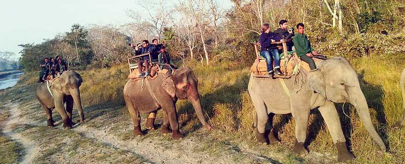 elephant-B-5a5ea4696666e5.76672346.jpg