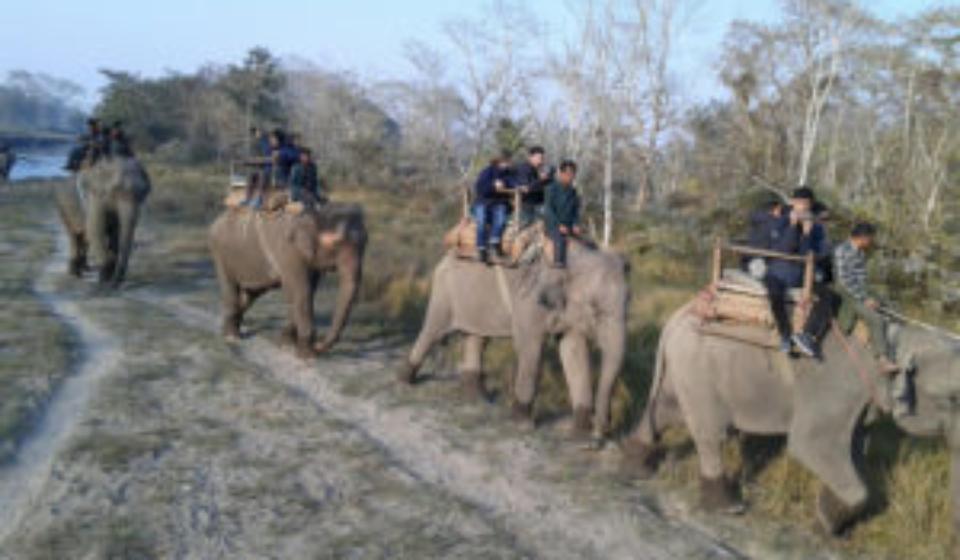 हात्ती सफारी रोकिए वन्यजन्तु पर्यटन ध्वस्त'