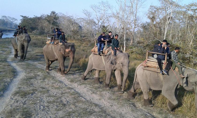 safari-2B.jpg
